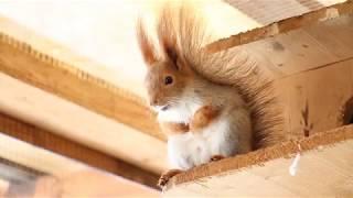 Белка песенки поет... Приколы с животными. Смешное видео. Интересное видео. Про зверей. Про белок.