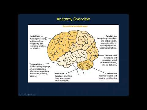 Webinar: What You Should Know about Behavioral Variant FTD (bvFTD)
