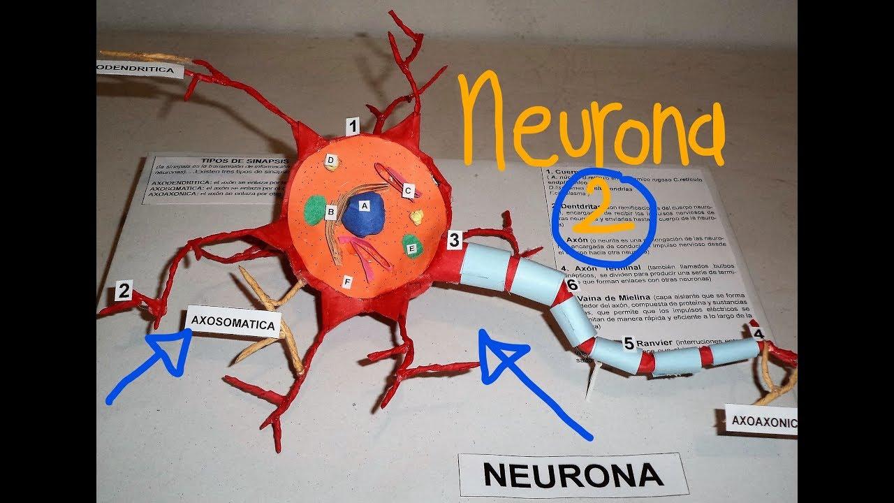 Neurona De Papel 2 Maqueta