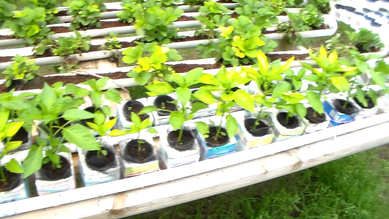 Hydroponic Vegetable Gardening For Profit Garden Ftempo