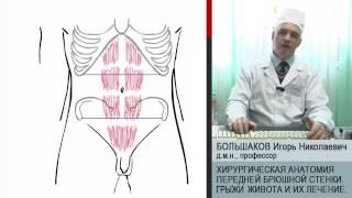 видео Хирургическая анатомия стенок живота (часть 1)