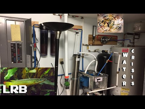 Water Crisis Whats Been Going On Fish Room Update