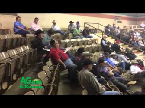Farm Factor - Salina Livestock Auction - Nov. 24, 2015