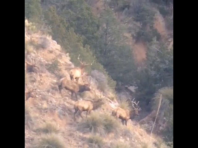 Elk Video Dec 19, 10 06 52 AM