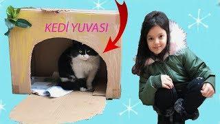 MASAL VE ÖYKÜ SOKAK KEDİLERİNE YUVA YAPTI! Funny Kids Videos - Cat Love