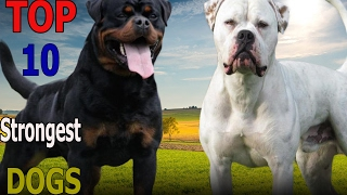 Top 10 strongest dogs in the world | Top 10 animals