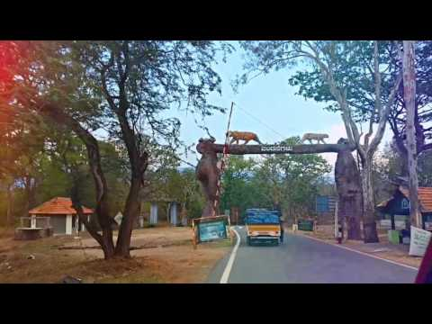 A Drive through the Forests of Karnataka