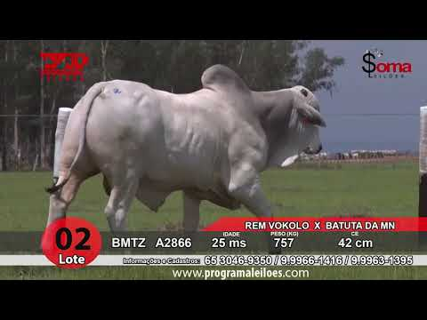 LOTE 02