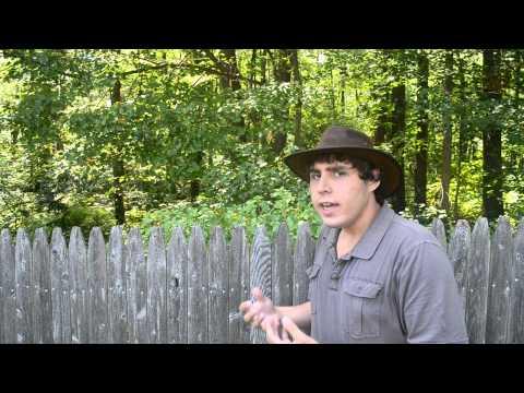 Plant Biology, Jewelweed Plant