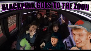 BLACKPINK GOES TO THE ZOO! | BLACKPINK HOUSE EPISODE 6 PART 1 & 2 (COUPLE REACTION!)
