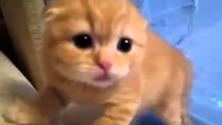 위협해도 귀여운 아기고양이 ..ㄷㄷㄷ