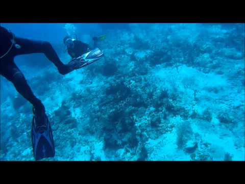 Scuba diving in Playa del Carmen/Cozumel - SJ4000