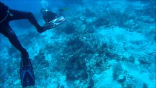 Scuba diving in Playa del Carmen/Cozumel - SJ4000
