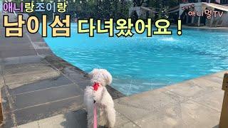 애니멀TV) 애니랑조이랑 남이섬 탐방기 ! | 강아지v…
