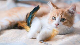 KITTENS MEOWING ~ CUTE KITTENS VIDEOS