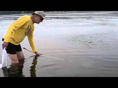 Crab fishing in Boundary Bay