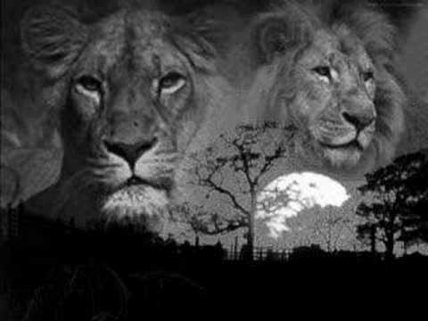 parole lion et mort soir