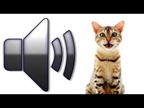 Как мяукают кошки видео для детей