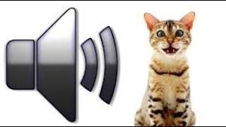 Download Топ 10 Мяуканье кошек которые бесят вашего кота или собаку - прикол над своим котом! Mp3 and Videos