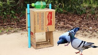 Creative Best Bird Trap Technology Make from Cardboard With Water Bottle - Work 100%