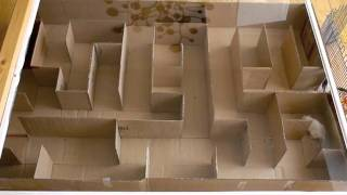 Gerbil Maze