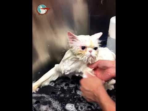 Who Said Cats Hate Baths  HD