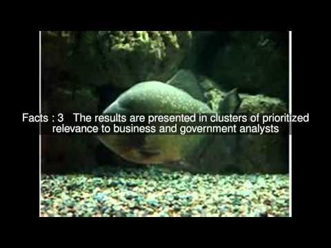 Piranha (software) Top  #9 Facts