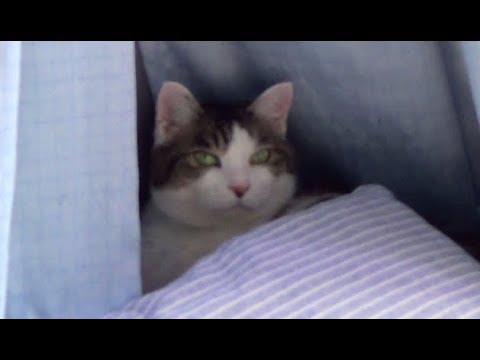 【身を隠すのが好きなのら】A cat that likes to hide