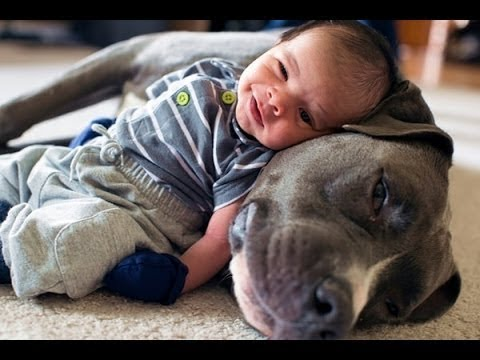 Why Dogs bite Babies and Children