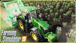 FARMING SIMULATOR 19 #43 - PIANTIAMO CANNE DA ZUCCHERO - GAMEPLAY ITA