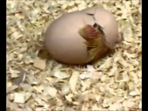 Animales Ovparoswmv  YouTube