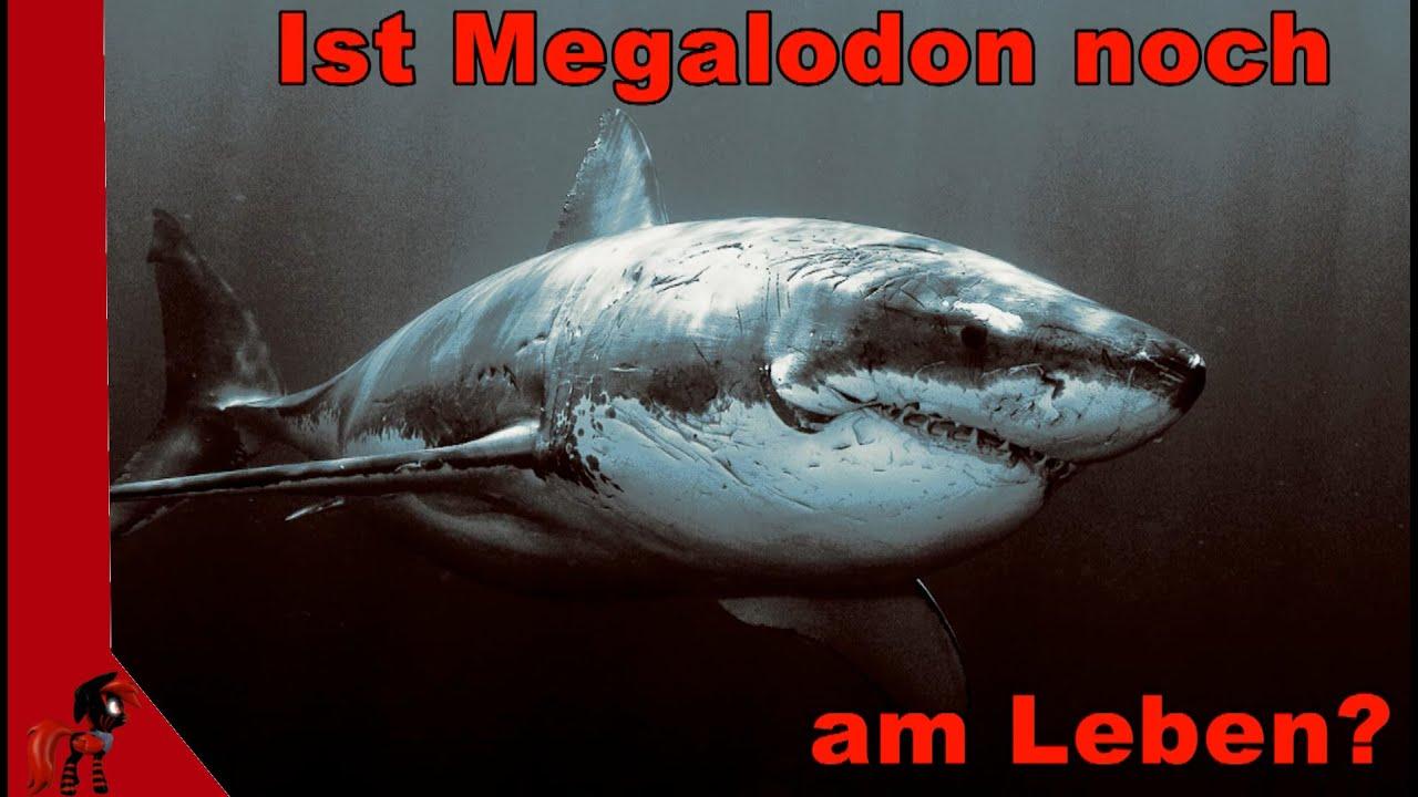 Wie Groß Ist Der Megalodon