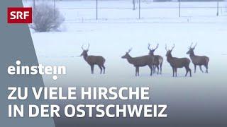 Hirsch-Schwemme, Hungersnot durch Tambora-Vulkan, Carbon-Hufeisen - Einstein vom 9. April 2015