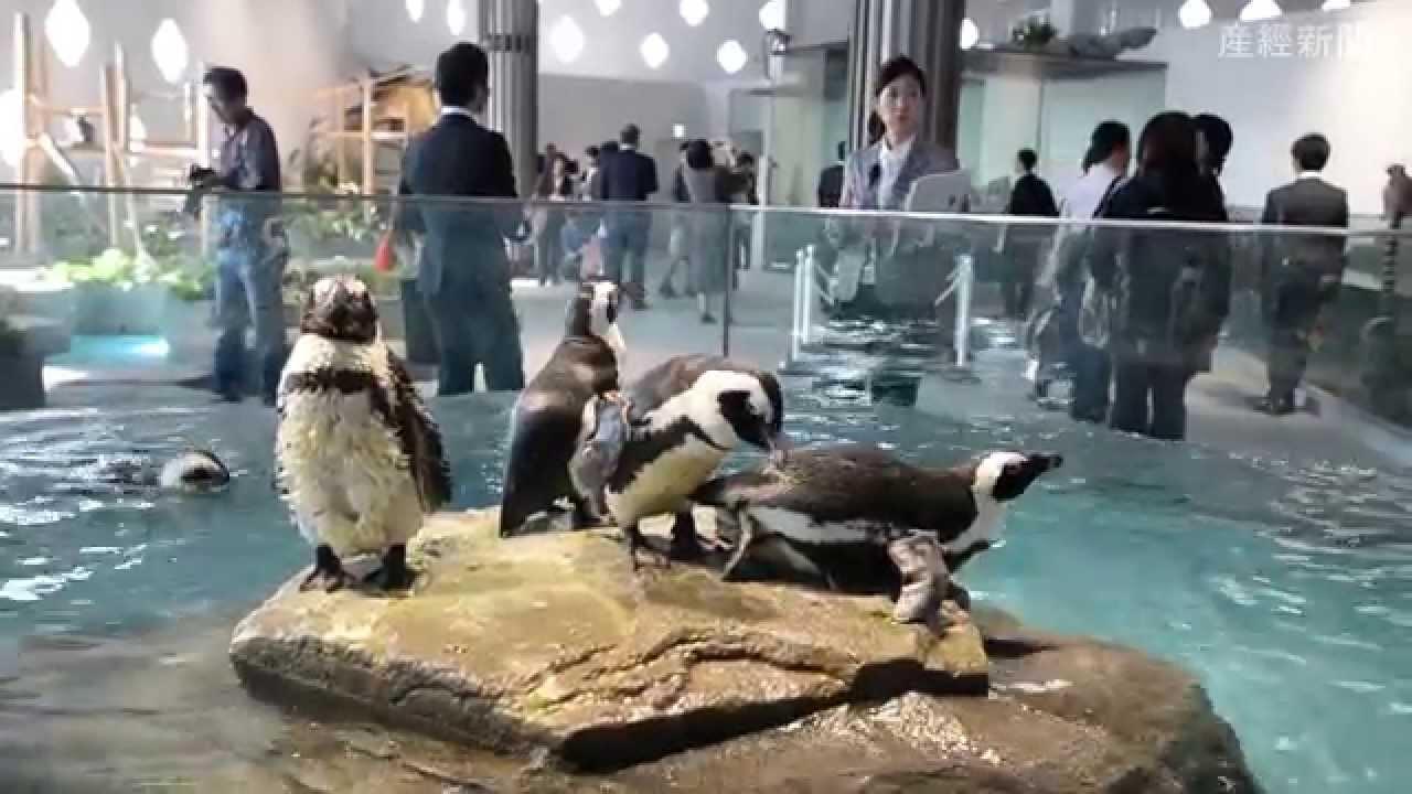 EXPOCITY・NIFREL(ニフレル)内覧会 - YouTube