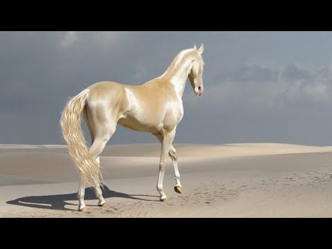 Meet The Rare Creature People Are Calling 'The Most Beautiful Horse In The World'