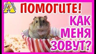 ХОМЯЧОК СИРОТА ВЫБИРАЕМ ИМЯ / КАК НАЗВАТЬ ХОМЯКА / ДЖУНГАРИК / Funny hamster / АЛИСА ИЗИ