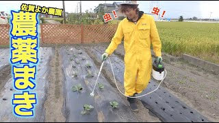 佐賀よか農園、虫にやられたから農薬をぶちまく!!