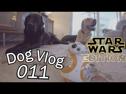 BB-8 Droid Attacks Dogs [Star Wars]