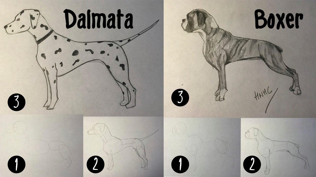 Como dibujar un perro dálmata y bóxer paso a paso - YouTube