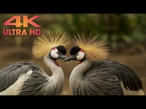 All beautiful Birds for video ultra HD