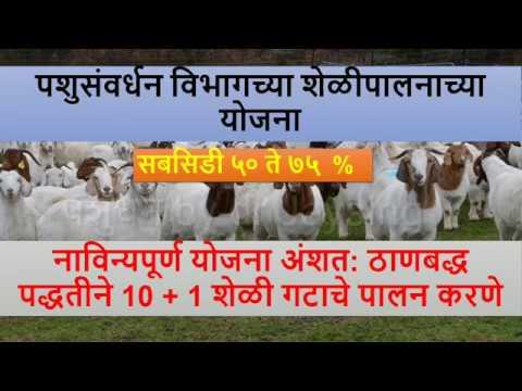 महाराष्ट्र शासनाच्या शेळी पालनाच्या योजना GOAT FARMING SCHEME OF MAHARASHTRA GOVERNMENT