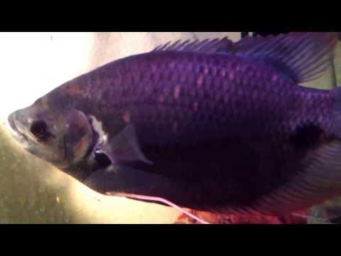 Jeff Heiser Testimonial - Nualgi Aquarium