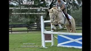 Mitril, 2008 Perlino Czech (Kinsky) Warmblood Stallion