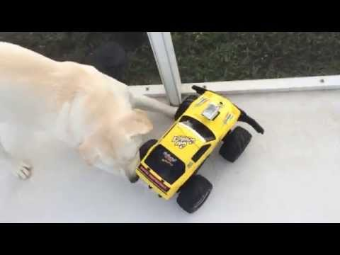 Chico's First Time | Remote Control Car