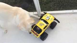 Chico's First Time - Remote Control Car Thumbnail