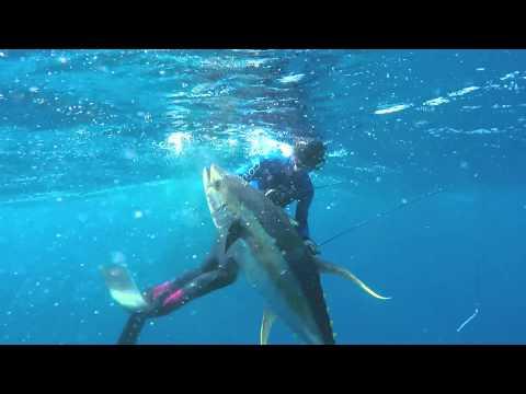 Spearfishing Yellowfin Tuna at Cape Point Tuna Grounds