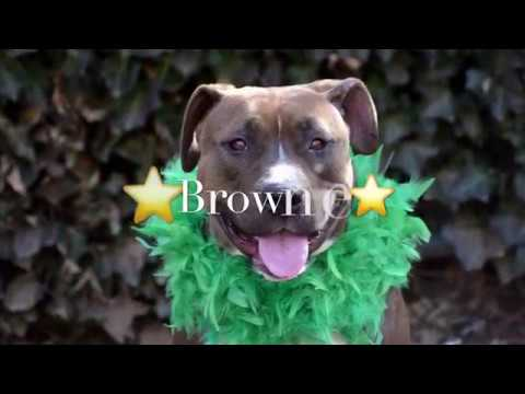 Brownie 21989/Green means go for this girl!