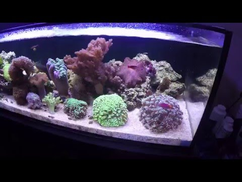 Reefing Texan - Another View of The Innovative Marine SR80 coral holding tank