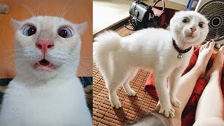 Try Not To Laugh or Grin While Watching Funny Animals Compilation #2