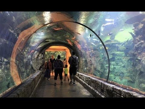 Las Vegas, Mandalay Bay Shark Reef Aquarium